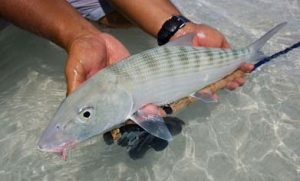 best handling bonefish web