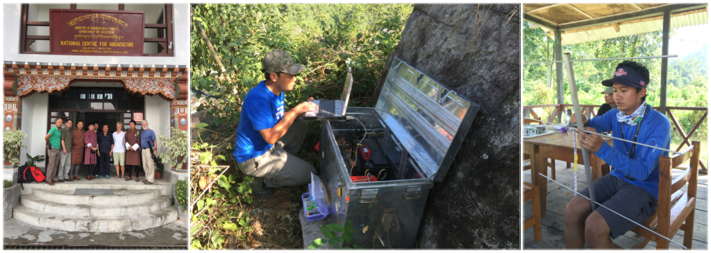 A visit to the National Centre for Aquaculture in Gelephu to tour the new Conservation Cenrte for Golden Mahaseer and Other Native Fishes. DK Gurung performs a diagnostic check on a receiver station: Karma Wangchuk assembles an antenna for a new recevier station.